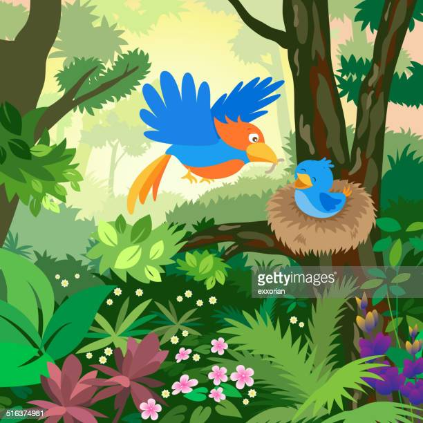 Birds Feed the Baby Bird in the Forest