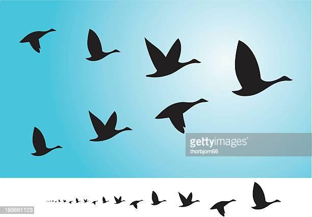 雁の画像 p1_31