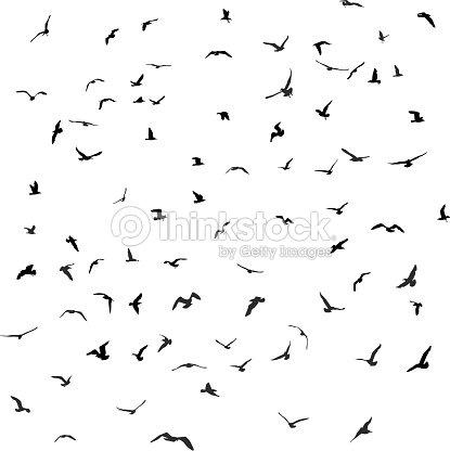 Vögel Möwen Schwarze Silhouette Auf Weißem Hintergrund Vektor ...