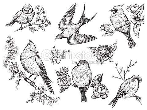 Birds hand drawn illuatrations in vintage style with spring blossom flowers. : stock vector