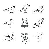 Birds icons thin line art set. Black vector symbols isolated on white.