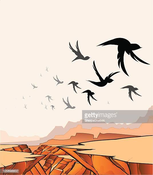 Birds Over Canyon