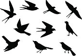 Set of silhouettes of flying and sitting birds