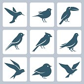 Birds vector icon set