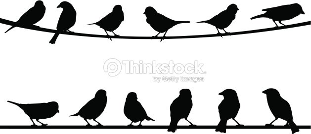 Birds Vector Art | Thinkstock