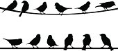 silhouettes of birds on wire