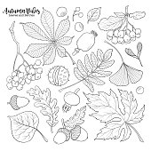 Set of hand drawn black and white autumn falling leaves and berries, sketch style vector illustration isolated on white background. Hand drawn leaves and berries - rowan, chestnut, oak, aspen, maple