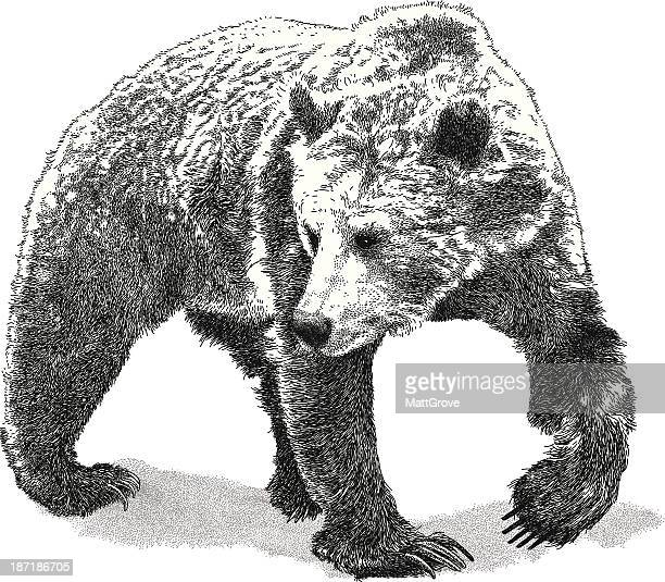 Black and white drawing of a large bear on white background