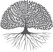 Black and white drawing of deciduous tree. Black silhouette on a white background. Large krone root system. Isolated. Vector Image.