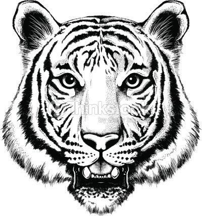 black and white illustration of a portrait of a tiger vector art