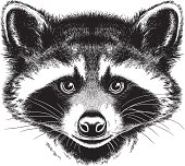Black and white vector sketch of a Raccoon's face