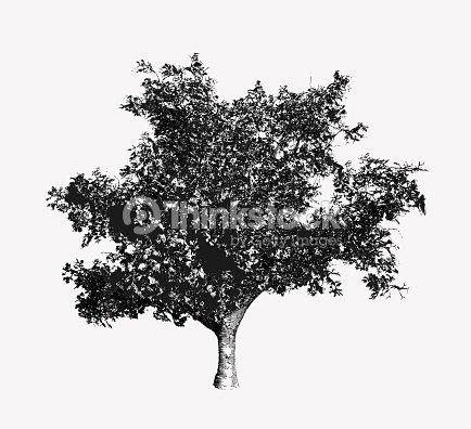 Arbre Noir Et Blanc Dessin Illustration Clipart Vectoriel Thinkstock