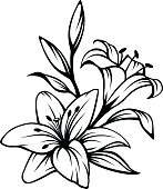 Vector black contour of lily flowers isolated on a white background.