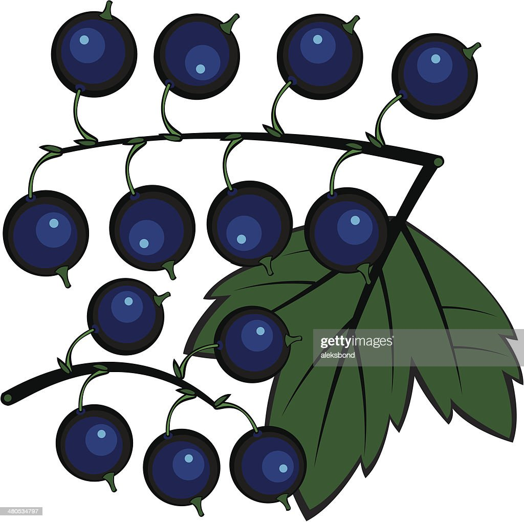 black currant isolated on white background : Vector Art