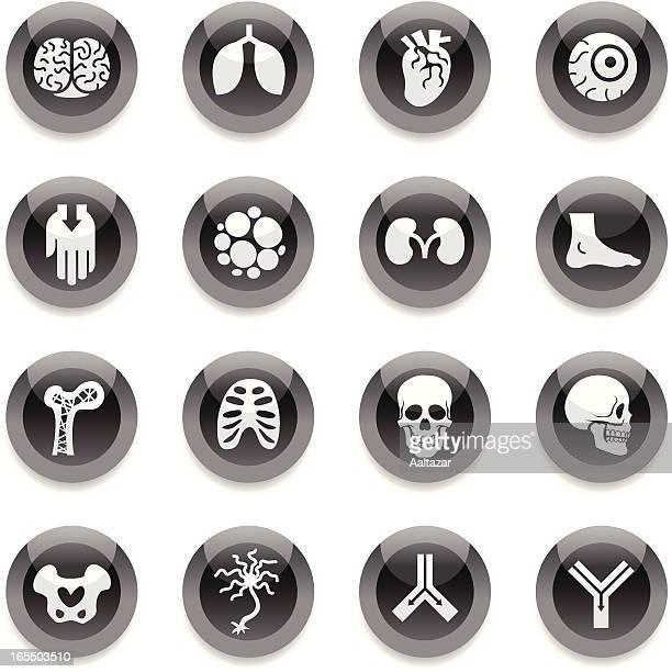 Black Round Icons - Anatomy