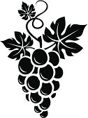 Vector illustration of black silhouette of bunch of grapes with leaves.