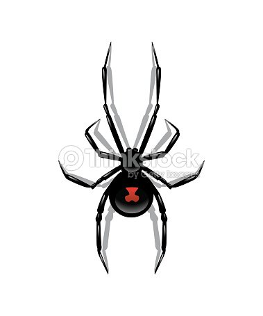 Black spider isolated on white background. Vector object. : Vector Art