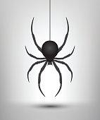 Black spider isolated. Vector spider. Black widow.