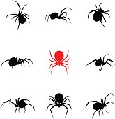 Black widow spider in silhouette style, vector