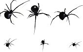 Vector, black widow from different angles. Little ones with no mesh.