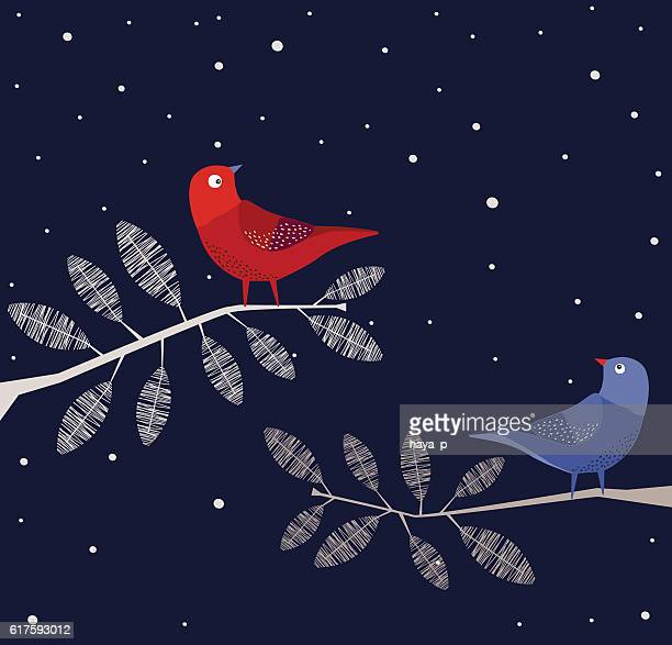 Blue and Red  Birds on branch, Night
