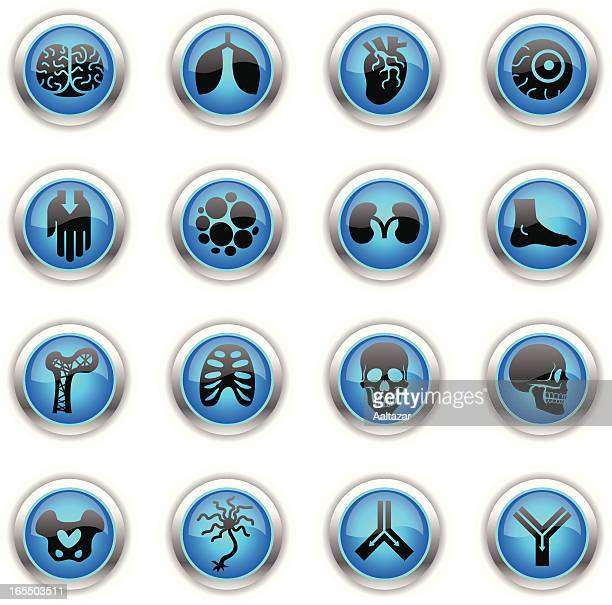 Blue Icons - Anatomy