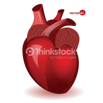 Body Heart With Veins In A Simple Comic Style Vector Art | Thinkstock