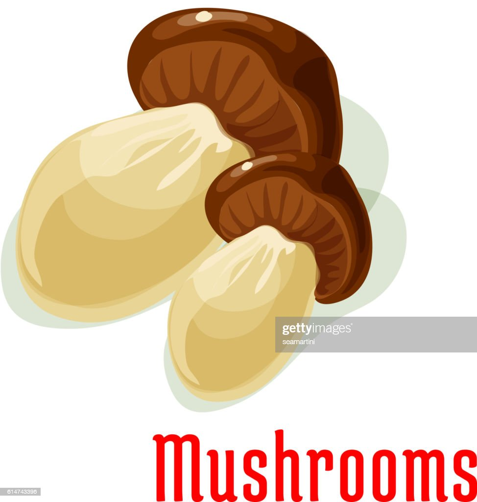 Boletus or porcini edible mushroom cartoon icon