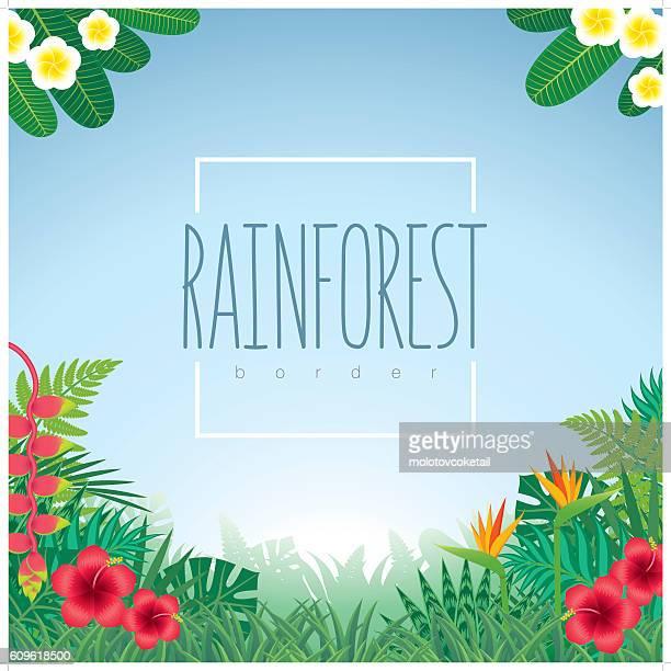 border-rainforest