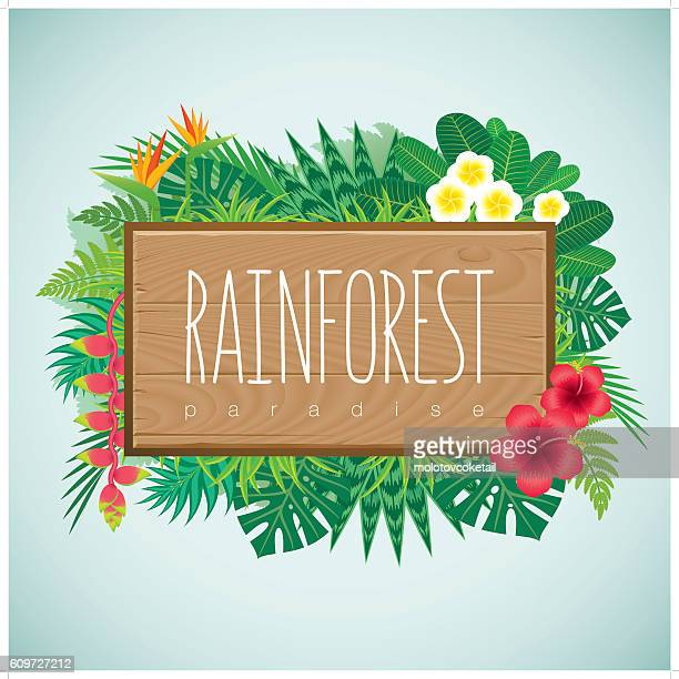 border-rainforest with wood