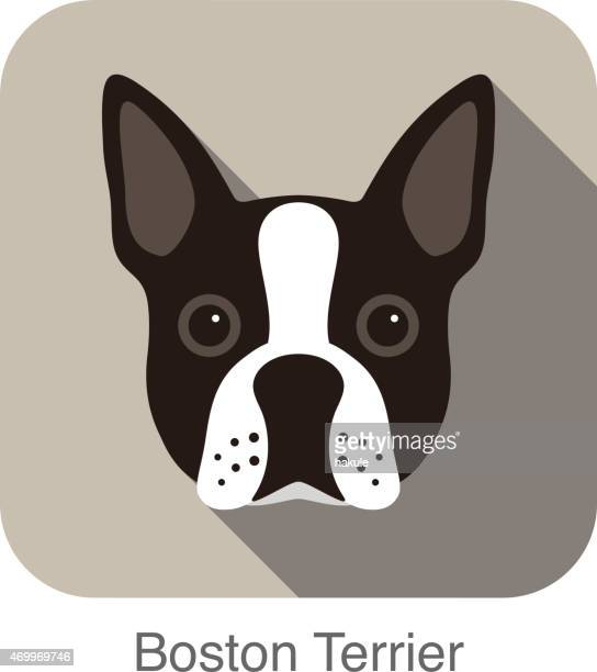 Boston terrier dog face portrait flat icon design