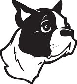 This black and white vector illustration is a cartoon of a Boston Terrier. The cartoon dog has a cute, slightly guilty look on his face. This terrier illustration can be used for any canine related de
