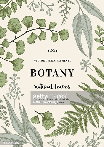 Botanical illustration with leaves. : Arte vetorial