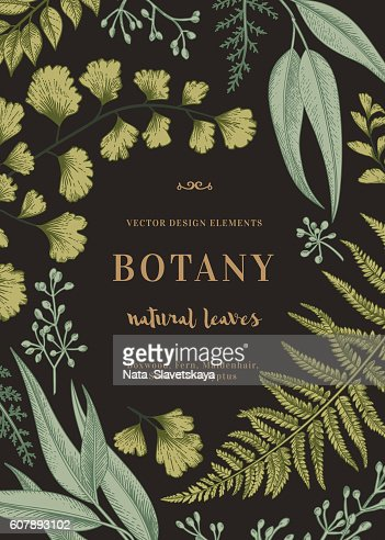 Botanical illustration with leaves. : Arte vettoriale