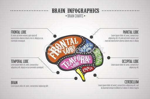 Gehirn Farbe Bereiche Unterteilt Werden Vector Gehirn Schnitte ...