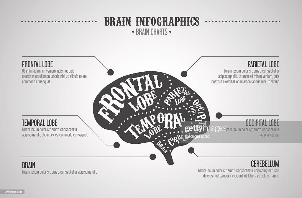Cuts Of Brain Diagram Data Wiring Diagrams