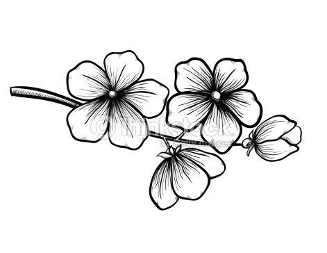 Branche dun arbre en fleurs dans un style noir et blanc - Dessin de fleur en noir et blanc ...