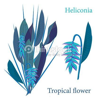 Fleur Tropicale Heliconia Branche Feuilles Aquarelle Dessin Dans Un