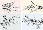 Vector image of the tree branches in the autumn.