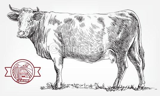 繁殖牛。畜産。家畜 : ベクトルアート
