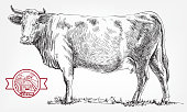 breeding cow. grazing cattle. animal husbandry. livestock. vector sketch on a grey background