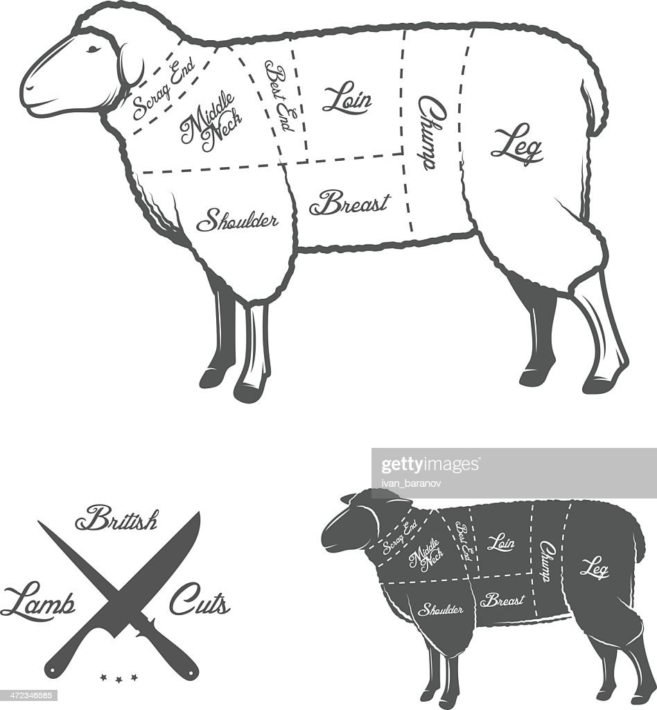 Anatomy Of A Sheep Diagram Trusted Wiring Diagrams