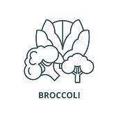 Broccoli vector line icon, outline concept, linear sign