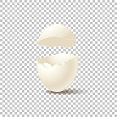 Broken empty eggshell isolated on transparent background. Vector realistic design element.