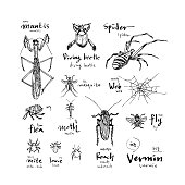 Hand drawn insect illustration - vector