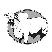 Bull zebu .vector illustration.eps 10