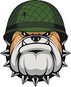 Vector illustration, angry head bulldog soldier helmet on a white background