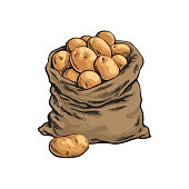 Burlap sack full of ripe potato, hand drawn, sketch style vector illustration isolated on white background. Hand drawn full burlap potato sack, isolated vector illustration
