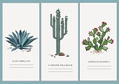 Business cards set with isolated cactus and agave design. Vector illustration