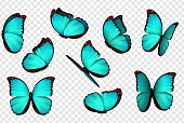 Butterfly blue vector illustration. Set blue isolated butterflies. Insects Lepidoptera Morpho amathonte.